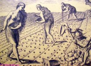 Indentured servants - Sklaven – arbeiten auf den Tabakplantagen in South Carolina.