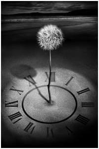 dandelion_time