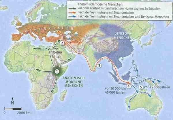 Spätestens vor 110.000 Jahren expandierten anatomisch moderne Menschen aus Ostafrika (1) auf die arabische Halbinsel und in den Nahen Osten. Vor etwa 50.000 Jahren vermischte sich eine Population der modernen Menschen mit den archaischen Neandertalern (2). Aus dieser Gruppe rekrutierten sich mehrere Wanderwellen, die erste entlang der Südküste Asiens (3). Vermutlich auf den Inseln Südostasiens trafen die Modernen auf archaische Denisova-Menschen – mindestens zwei Kreuzungen mit ihnen sind nachgewiesen (4). Träger von Neandertaler- plus Denisova-DNA erreichten vor 45.000 Jahren Neuguinea und Australien (5).