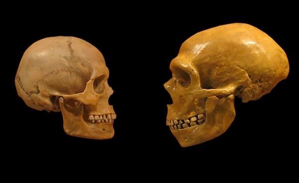 Schädelvergleich Cro-Magnon-Mensch (links) und Neandertaler (letzterer ist näher aufgenommen)