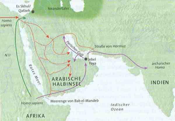 Nach aktuellen archäologischen Befunden könnte Homo sapiens früh den Bab el-Mandeb überquert, Südarabien besiedelt und sich von dort aus weiter in Asien verbreitet haben (lila Pfeile). In Jebel Faya wäre er demnach vor 125.000 Jahren in Erscheinung getreten. Einem schon früher diskutierten Szenario zufolge wanderte der moderne Mensch auf einer nördlichen Route über den Suez zuerst in die Levante – entweder kam er aus Ostafrika (grüner Pfeil) oder aus der Sahara (durchgezogener roter Pfeil). Seine Fossilien fanden sich in den israelischen Höhlen von Es Skhul und Qafzeh. In feuchten Klimaphasen hätten diese Menschengruppen in Arabien genügend Gewässer vorgefunden, um auch dieses Gebiet zu besiedeln (punktierte Pfeile).