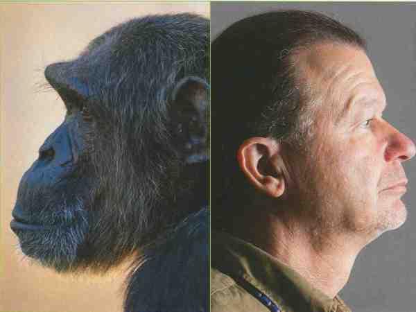 schimpanse-volker-sommer