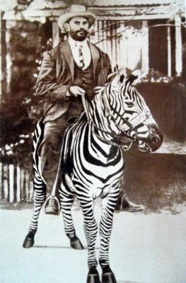 rosendo_ribeiro_on_zebra