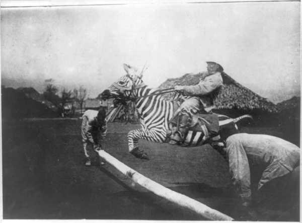 Springreiten mit einem zahmen Zebra, Ostafrika um 1900.