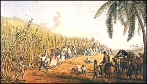 Die Geburt der Plantagensklaverei auf den Kanarischen Inseln